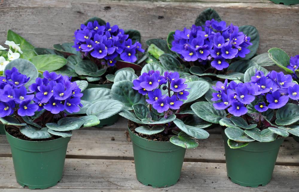 Piante da interno: per la casa piante resistenti e facili ...