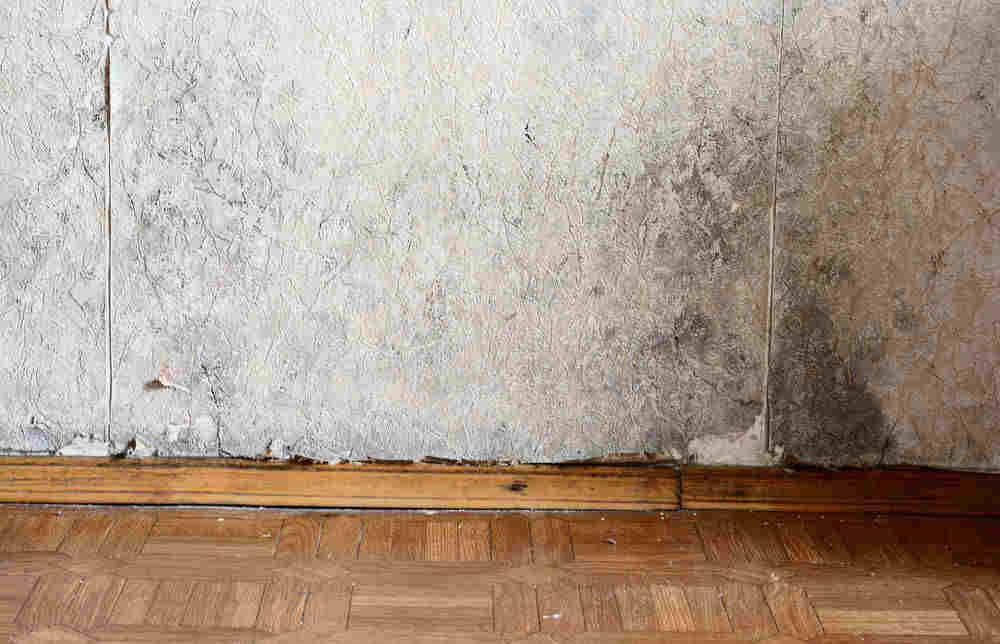 Muffa sui muri per perdite d acqua cosa fare per rimediare