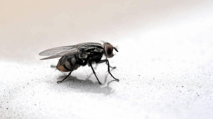Insetti e disinfestazione for Formiche volanti in casa