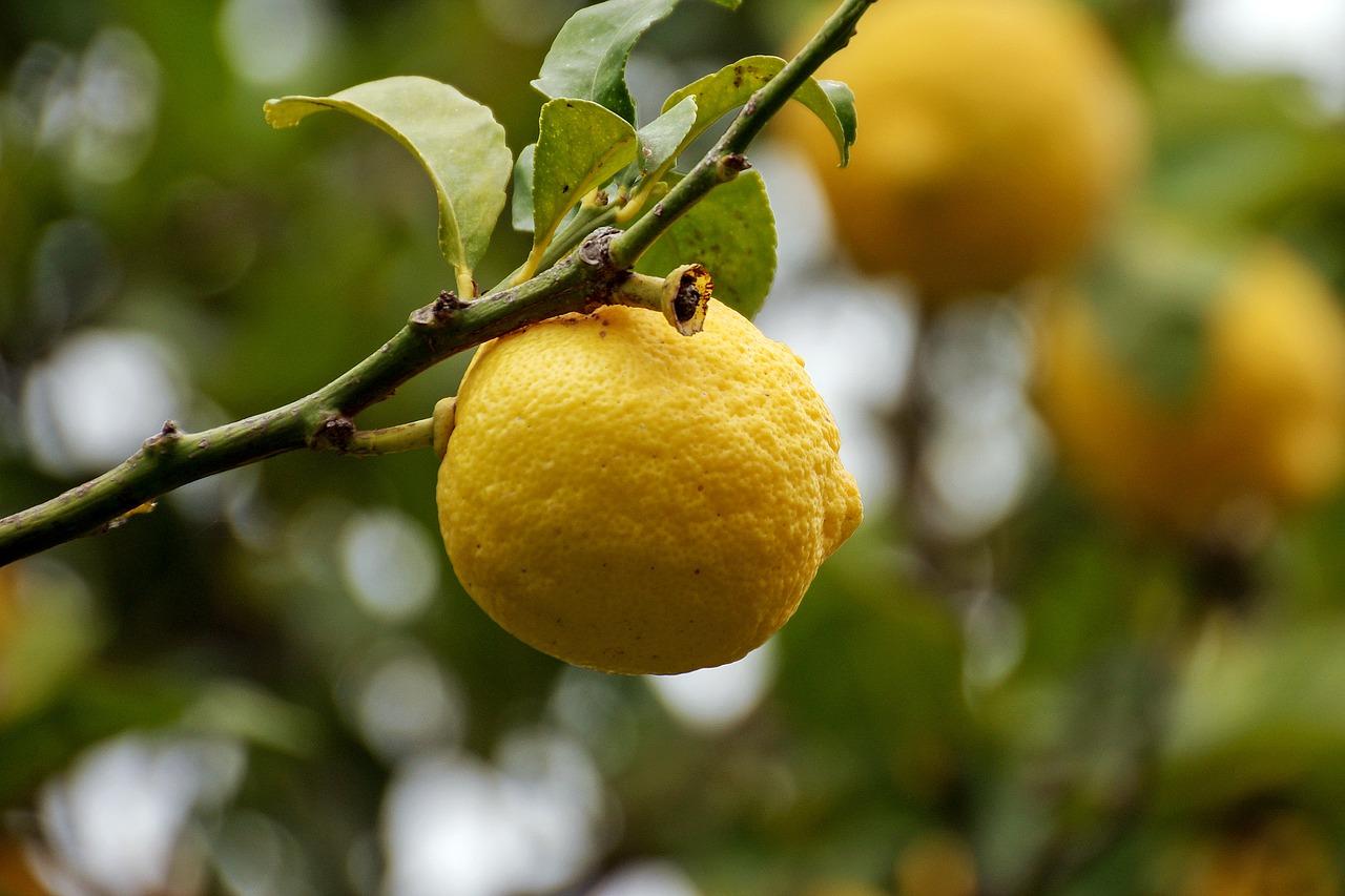 Quando potare il limone?
