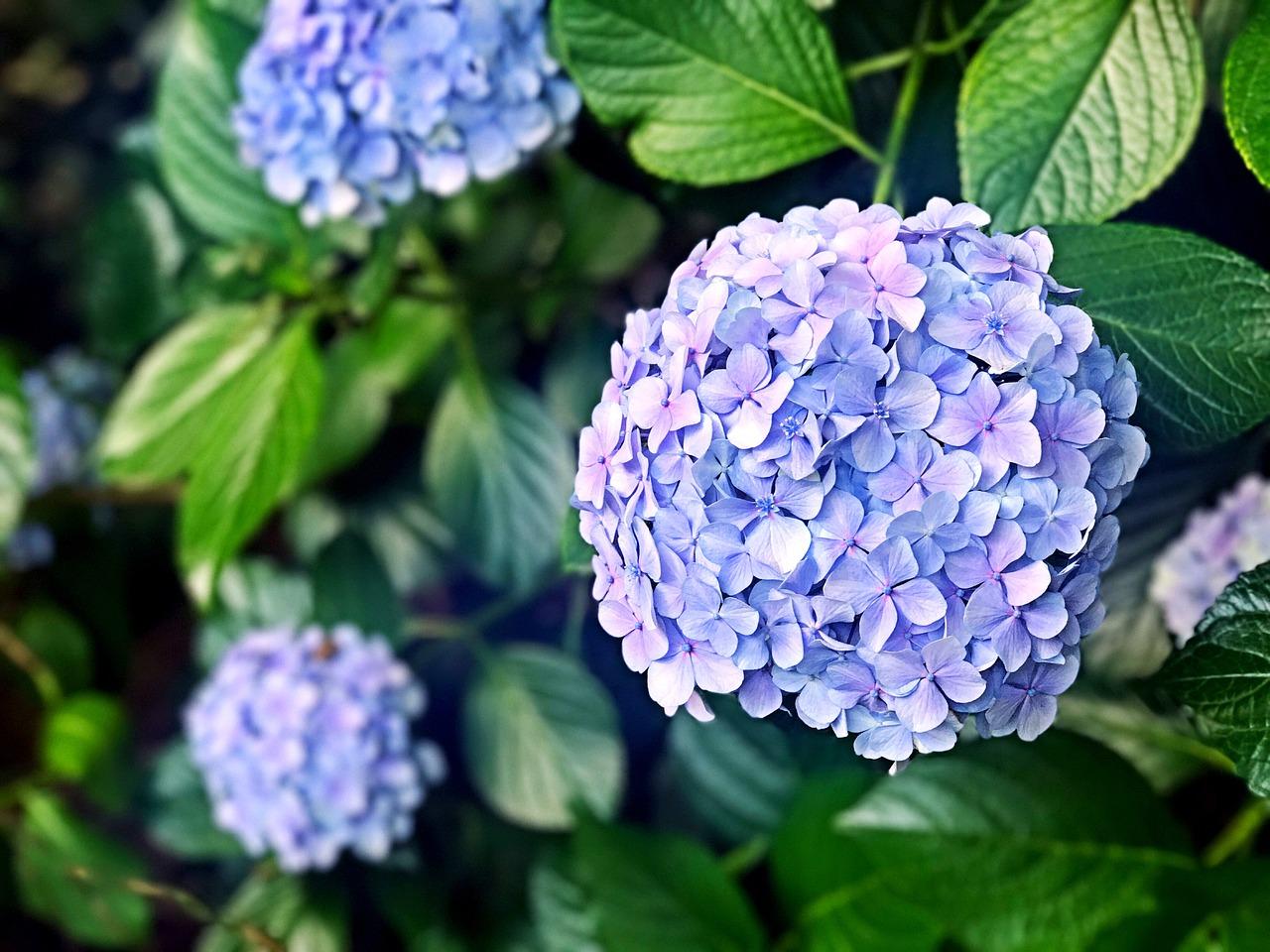 Quando Potare Il Bouganville magazine, idee e consigli - paginegialle casa - tag piante