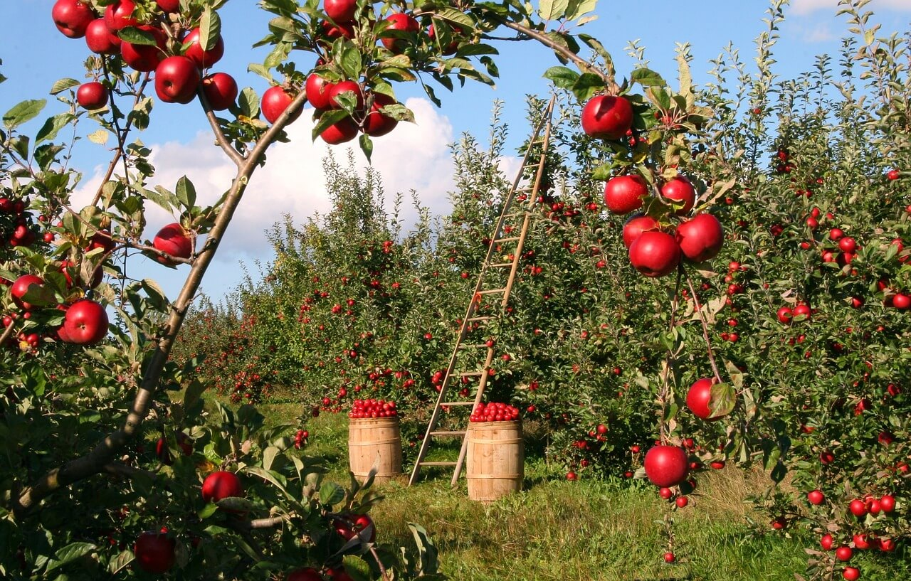 Immagini Di Piante E Alberi potatura degli alberi da frutto: il calendario completo