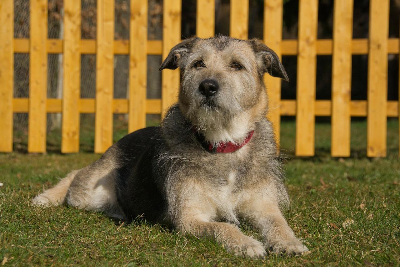 Recinzione Per Cani Giardino.Come Costruire Un Recinto Per Cani Fai Da Te Da Interno O Esterno