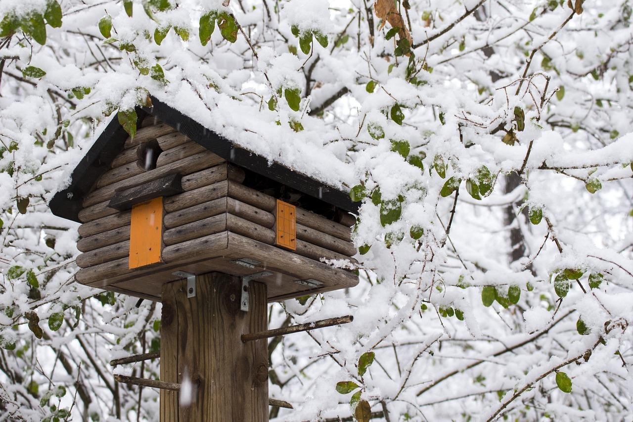 Come Progettare E Costruire Una Casa Sull Albero