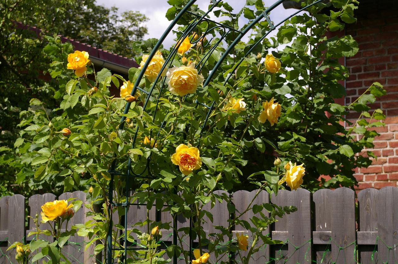Come Fare Un Giardino Inglese come progettare un giardino all'inglese?