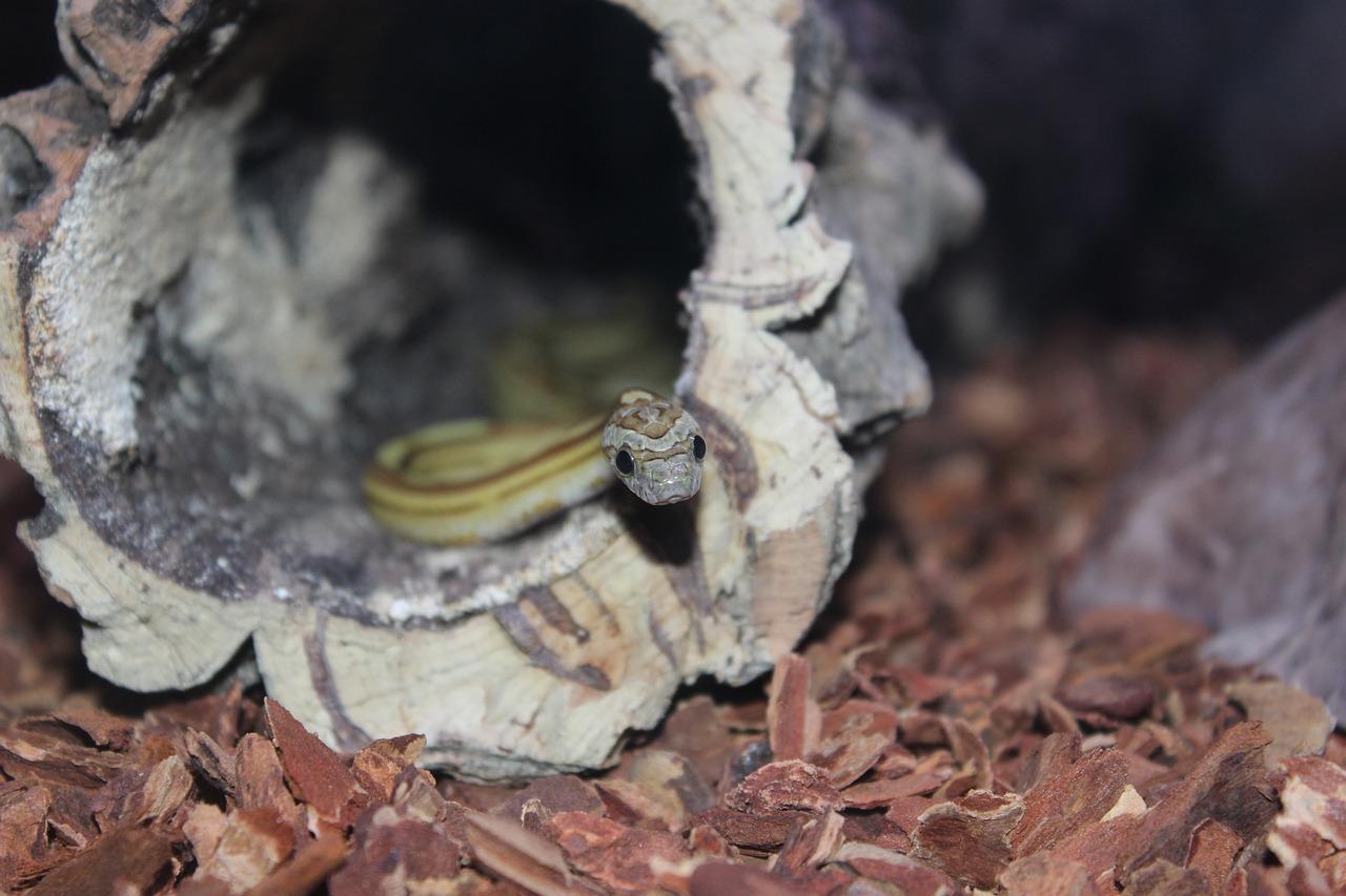 Disinfestazione serpenti: come allontanare i rettili dalla tua proprietà