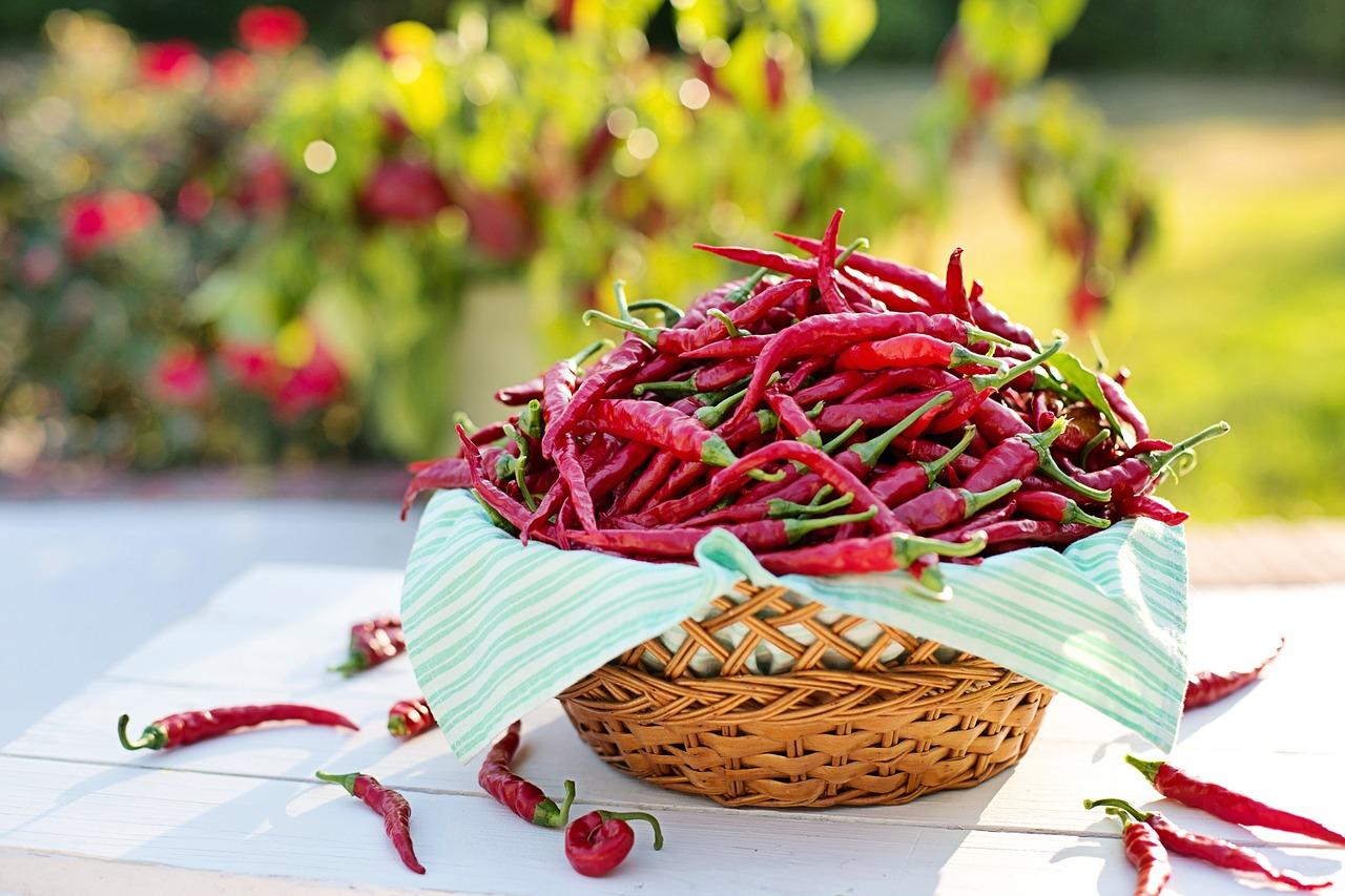 Come coltivare il peperoncino in casa e nell orto