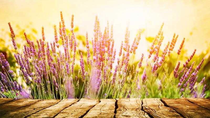 Le 5 Piante Da Giardino Resistenti Al Sole E Al Caldo