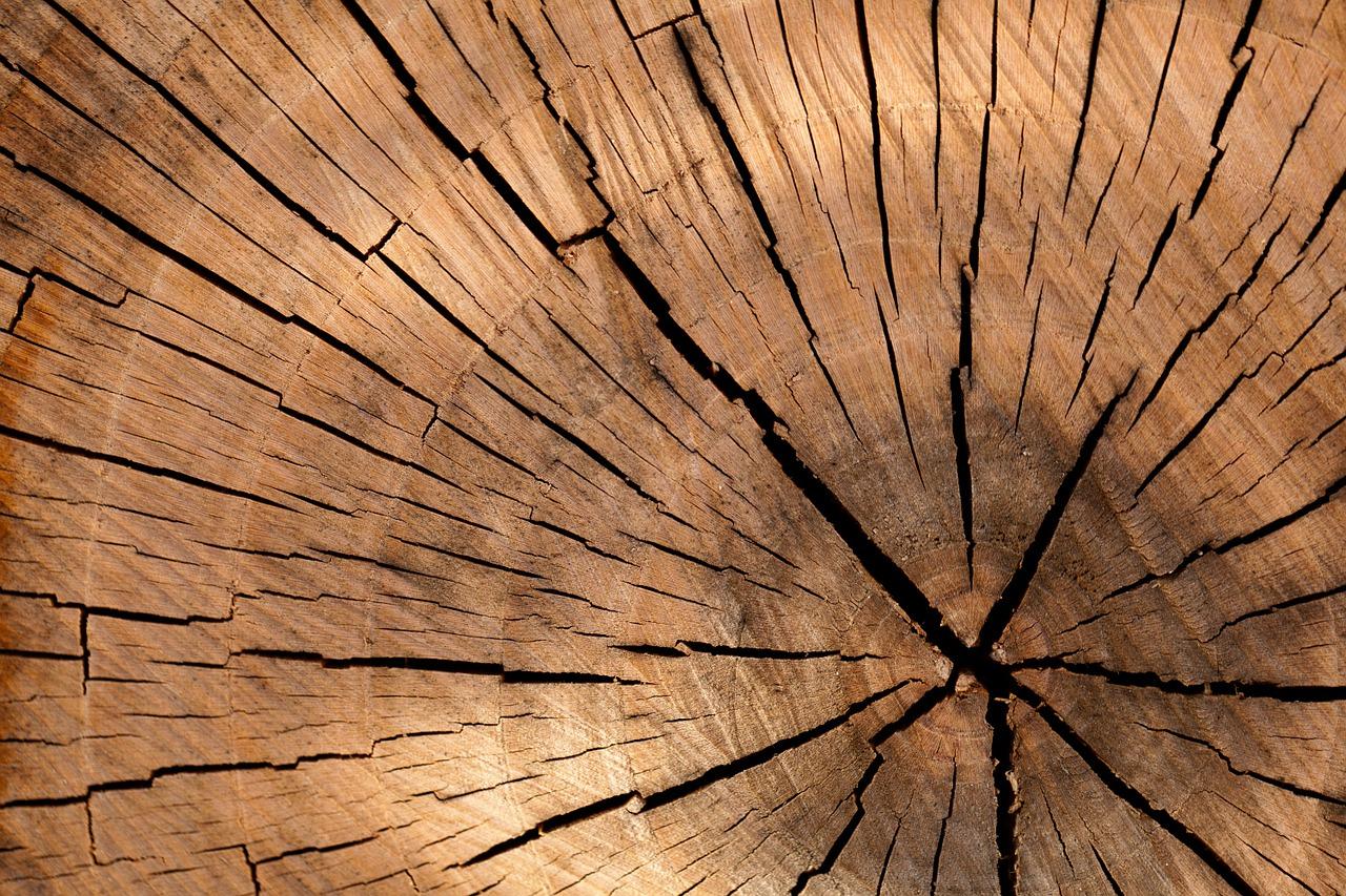 Che Cos È Il Legno legno iroko: origine, caratteristiche e prezzi