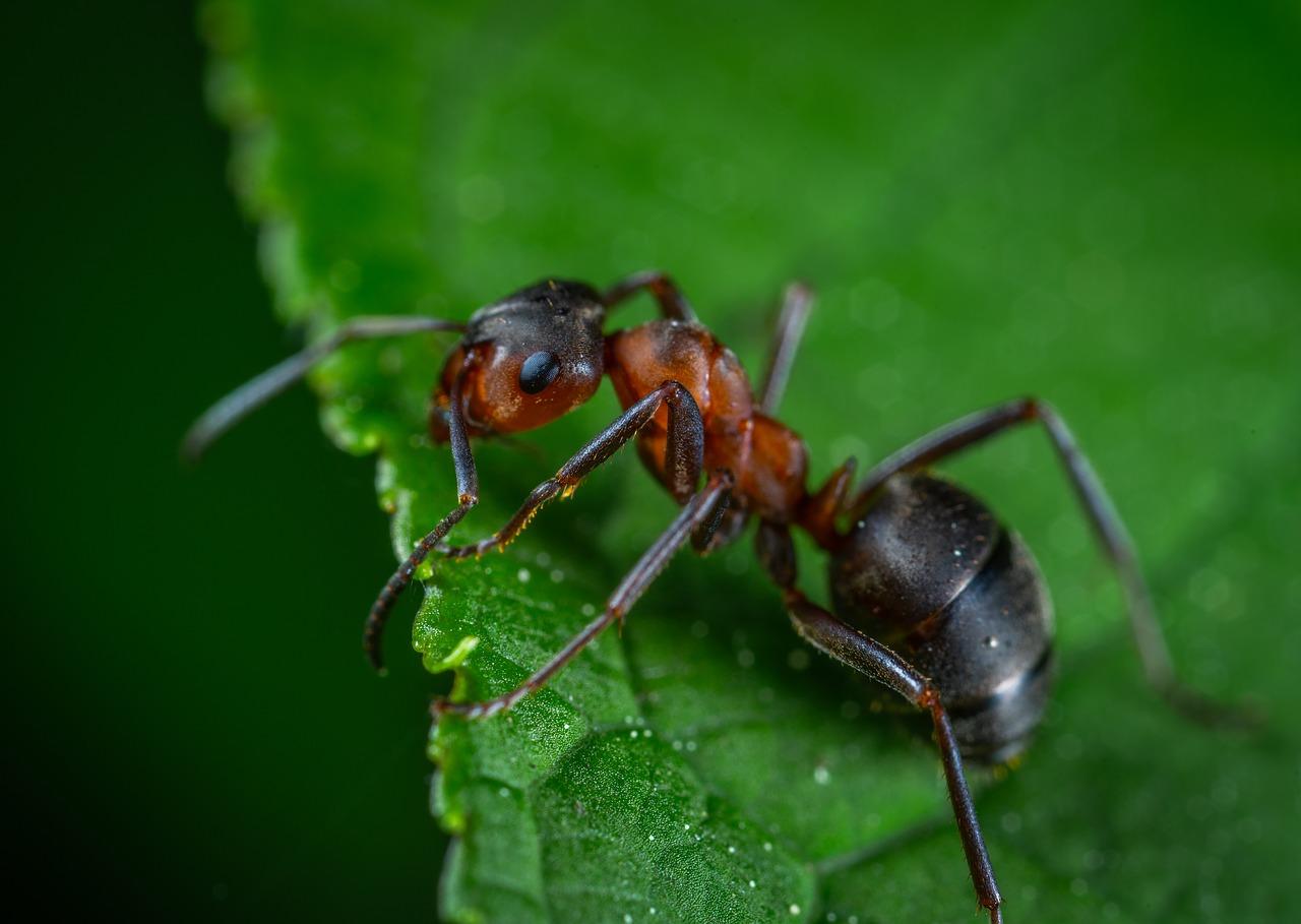 Prodotti Efficaci Contro Le Formiche come eliminare le formiche dal giardino?