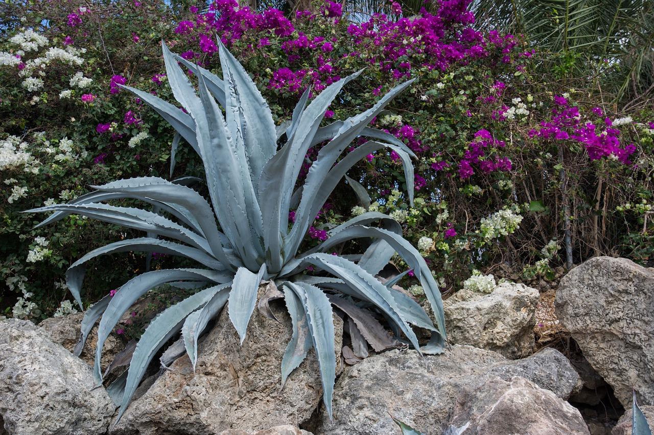 Arredare Un Giardino Idee come realizzare un giardino roccioso? idee e consigli