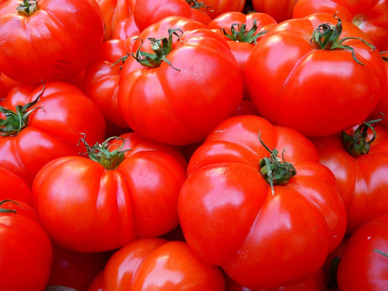Come Coltivare Pomodori Sul Balcone come coltivare i pomodori sul balcone