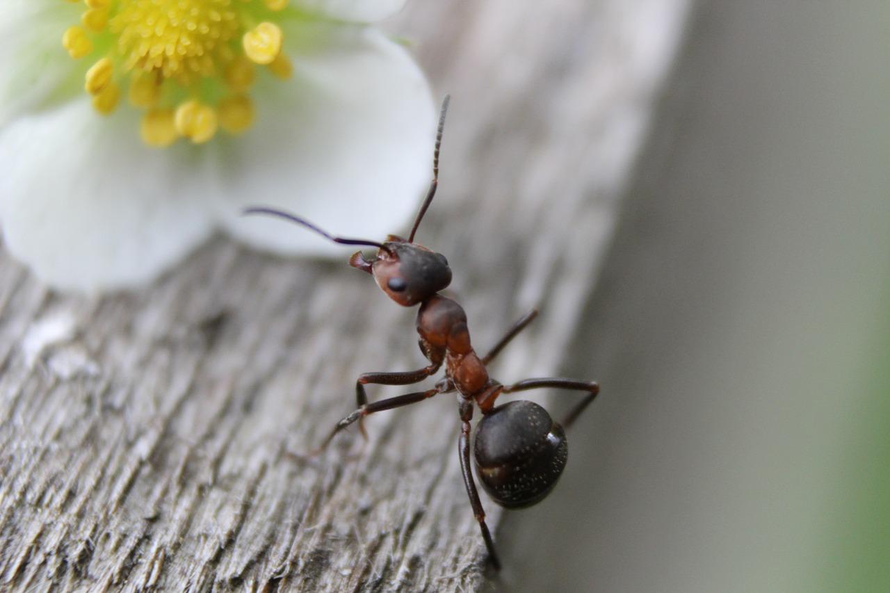 Prodotti Efficaci Contro Le Formiche esche e trappole per formiche: come funzionano?
