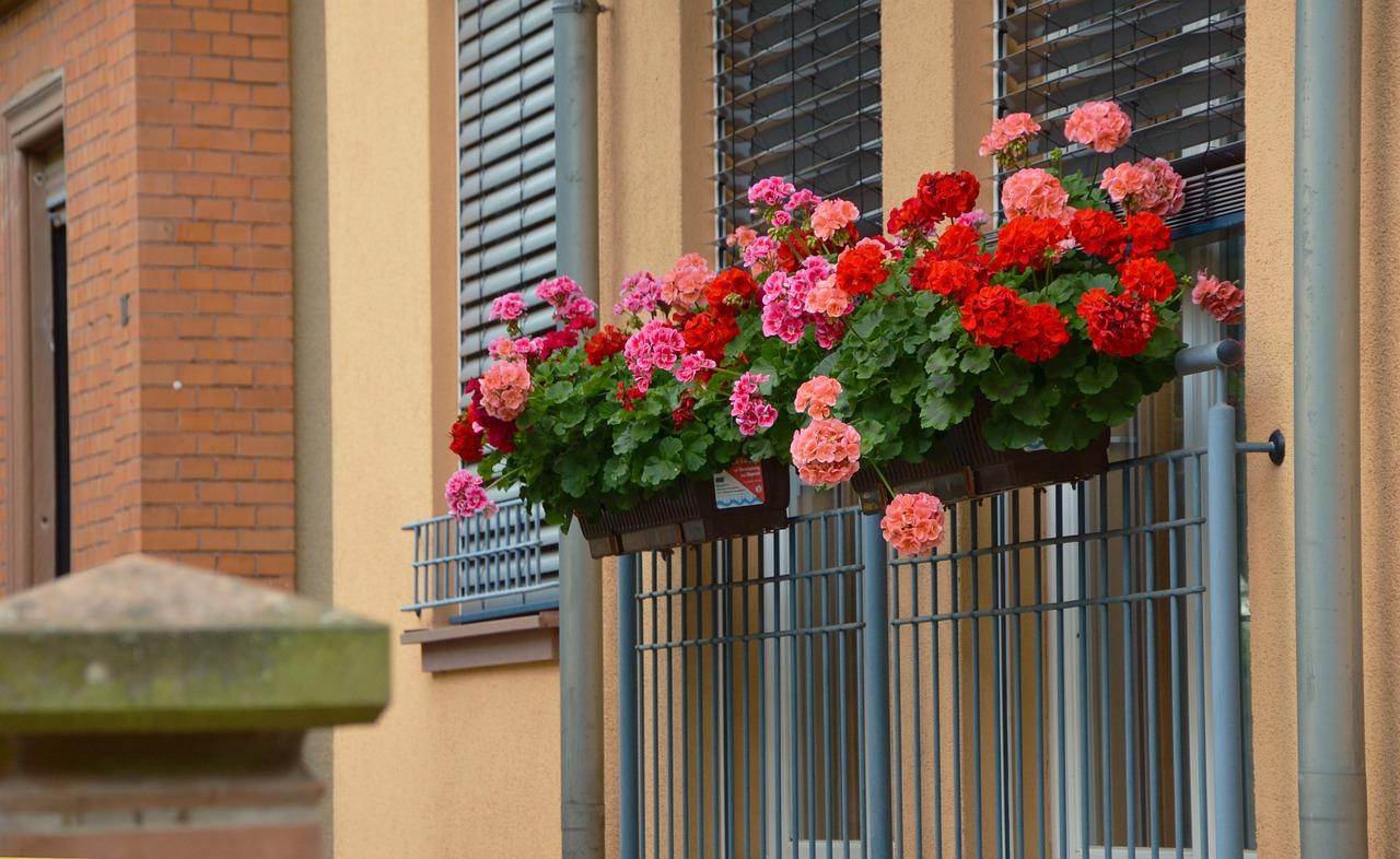 Fiori Da Balcone Perenni 5 fiori da balcone perfetti per stare in pieno sole