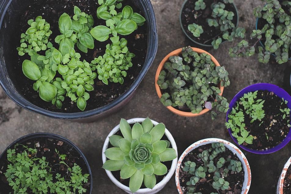 Arredare casa con le piante aromatiche