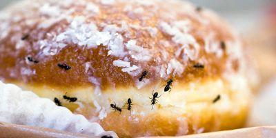 formiche in cucina