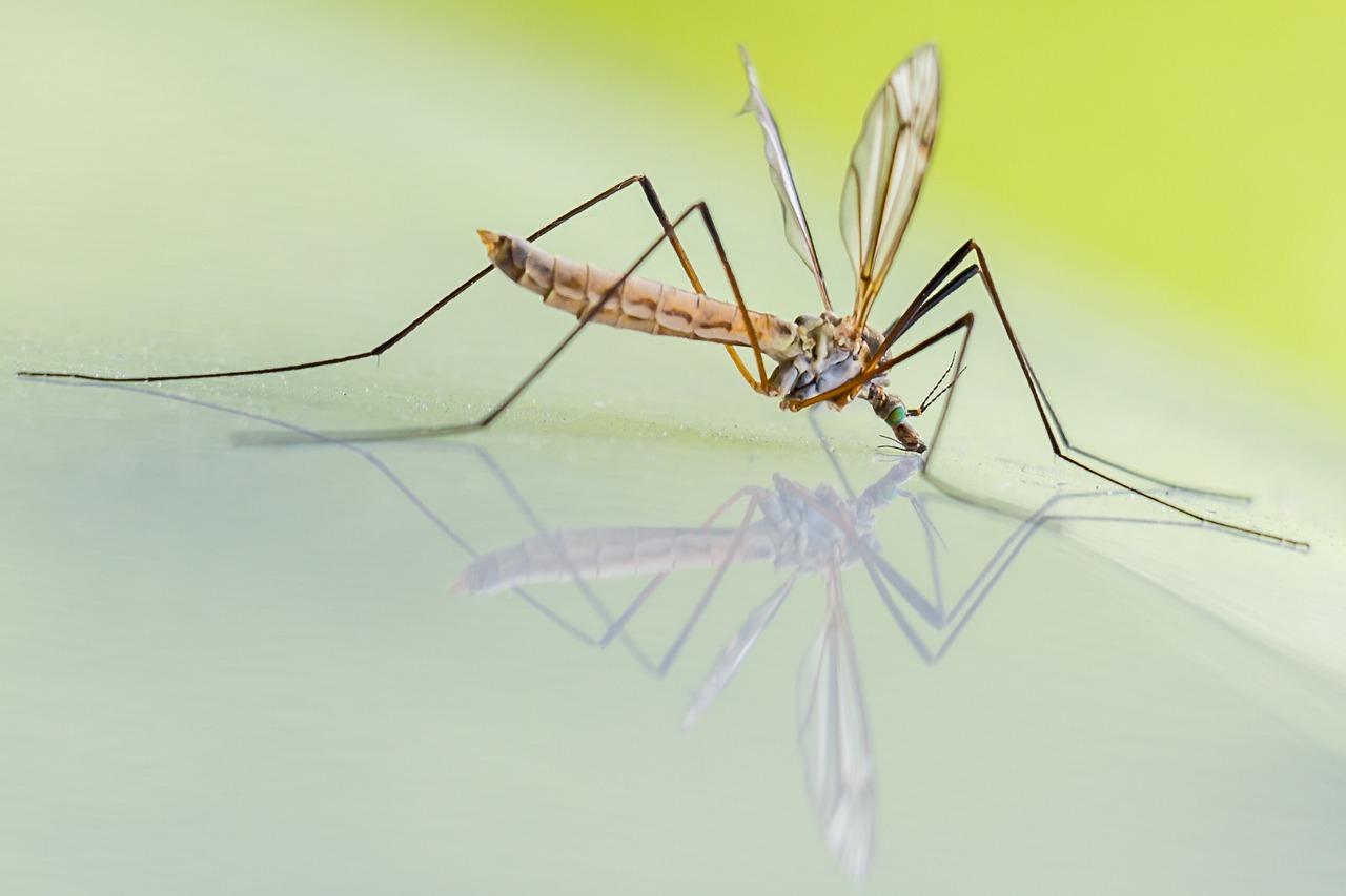 Prodotti Contro I Gechi come eliminare definitivamente le larve di zanzare?