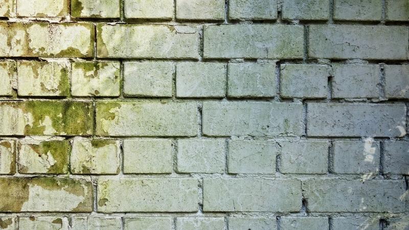 Muffa Sui Muri Tutti I Sistemi Per Eliminarla Efficacemente