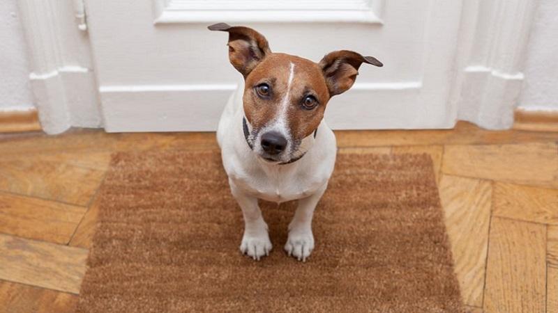 Come Restaurare Una Porta Di Legno.Il Restauro Delle Porte In Legno Rovinate Dagli Animali Domestici
