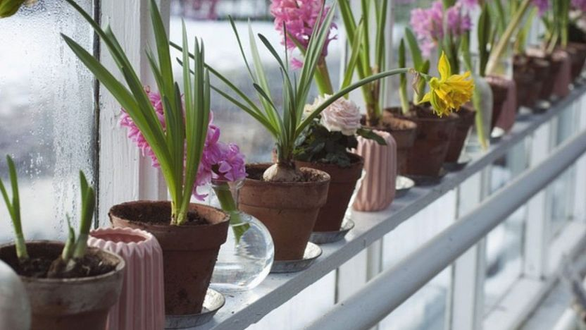 Tecniche di floricoltura