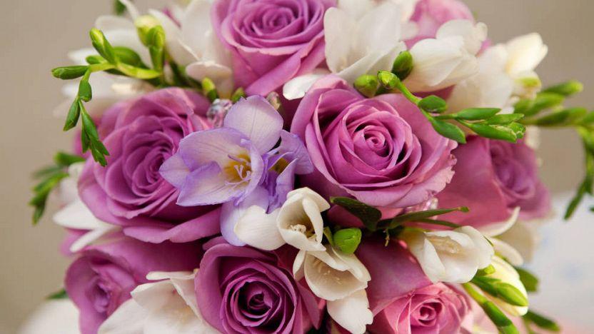 Piante e fiori per ogni