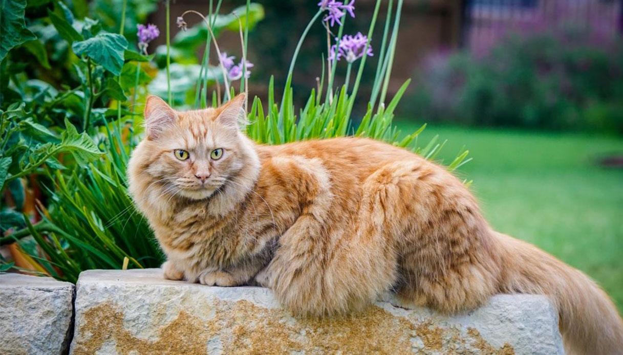 Piante Da Appartamento Non Nocive Ai Gatti.5 Piante Da Giardino Non Velenose Per I Gatti