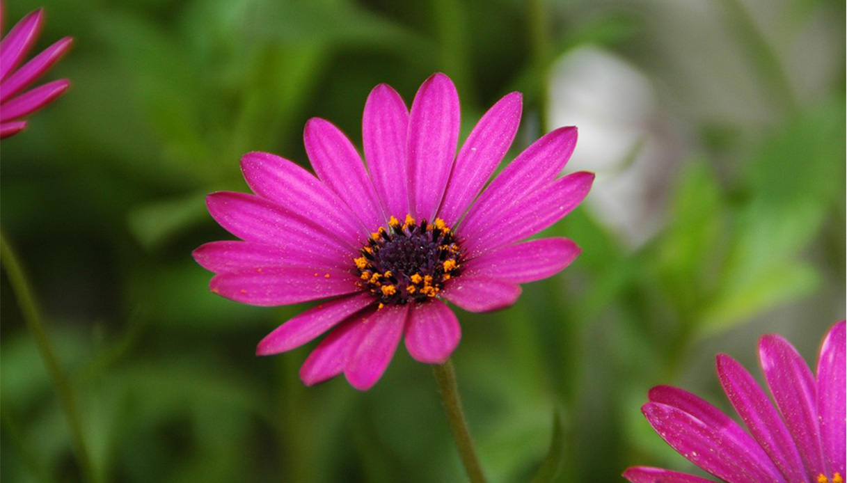 Fare Talee Di Oleandro giardinaggio, idee e consigli - paginegialle casa