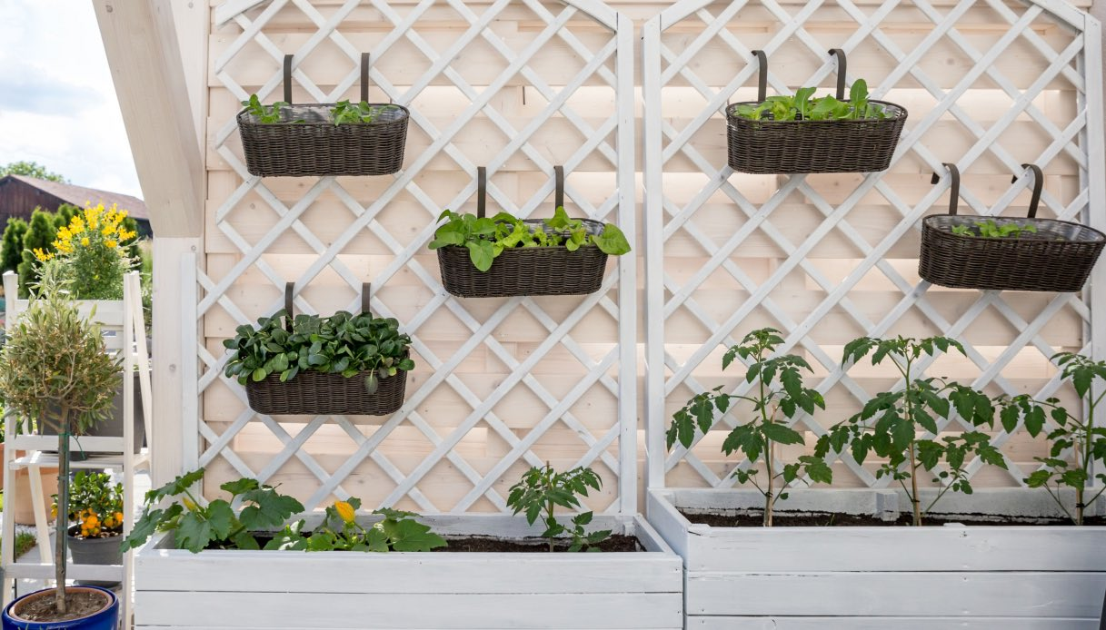 Giardini Verticali Fai Da Te come realizzare un orto verticale sul balcone
