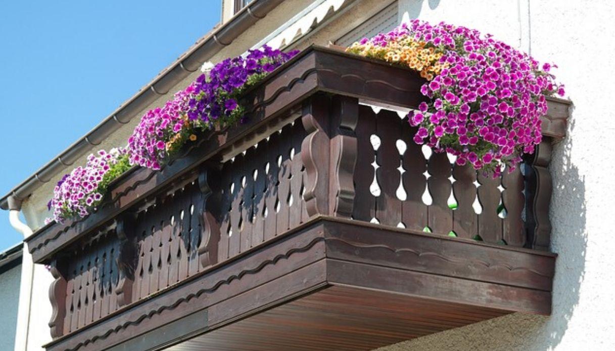 Fiori Da Balcone Ombra i fiori da balcone per la primavera/estate