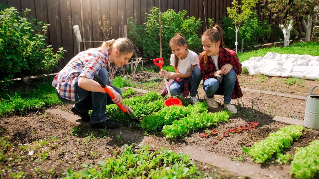 Piccoli Alberi Da Giardino alberi e le siepi adatti a un giardino piccolo