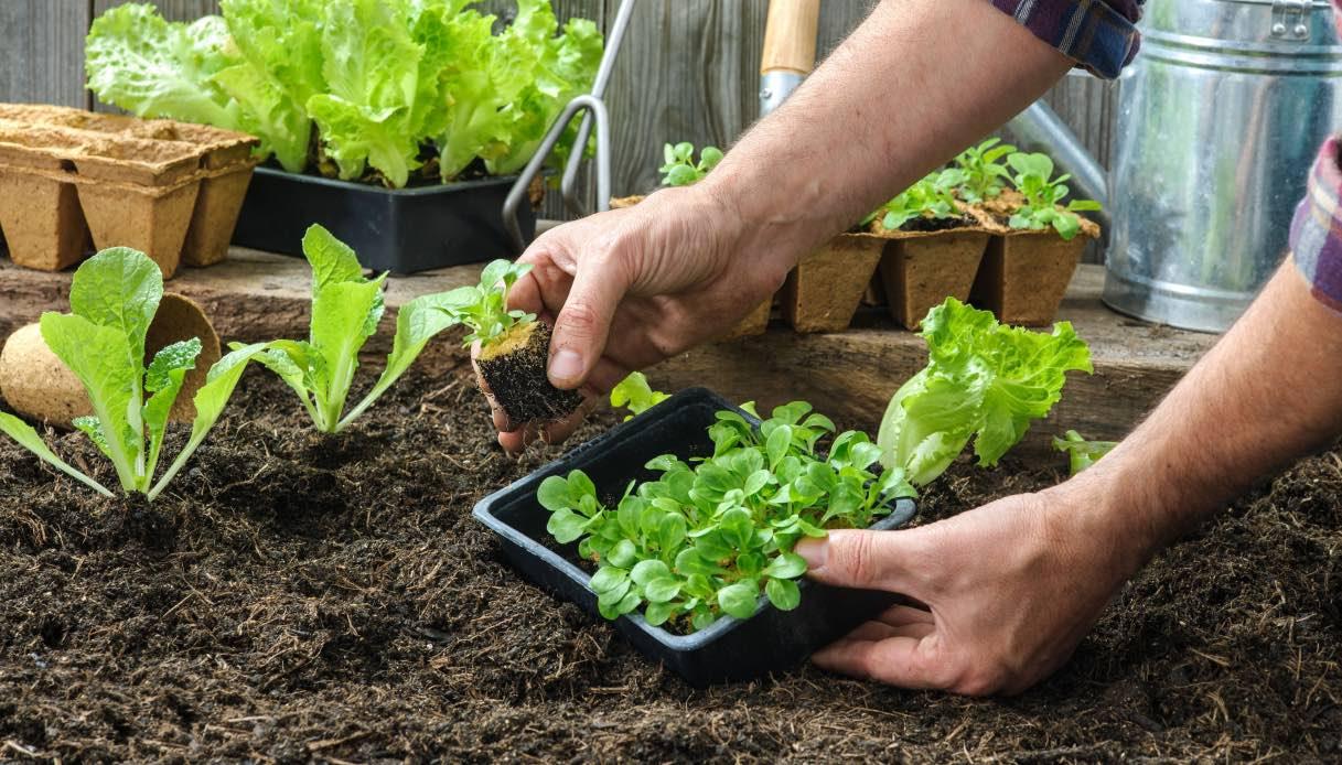 Cosa Seminare A Gennaio orto sul balcone: cosa piantare mese per mese