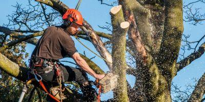 tagliare un albero