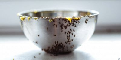 come trovare nido formiche in casa