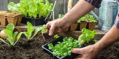 Come avere un giardino