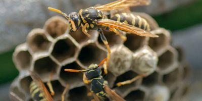 come eliminare nidi di vespe