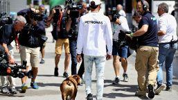 """F1, Hamilton: """"Il mio cane è vegano""""."""