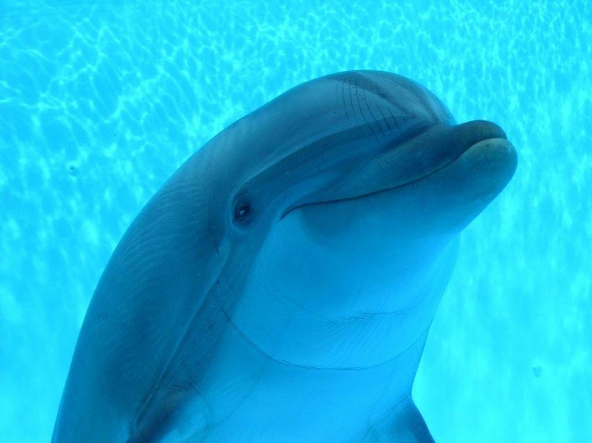 Visita all'acquario di Genova: prezzi dei biglietti e orari d'apertura