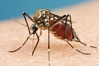 Allarme Zika: tutto quello che c'è da sapere sul virus killer
