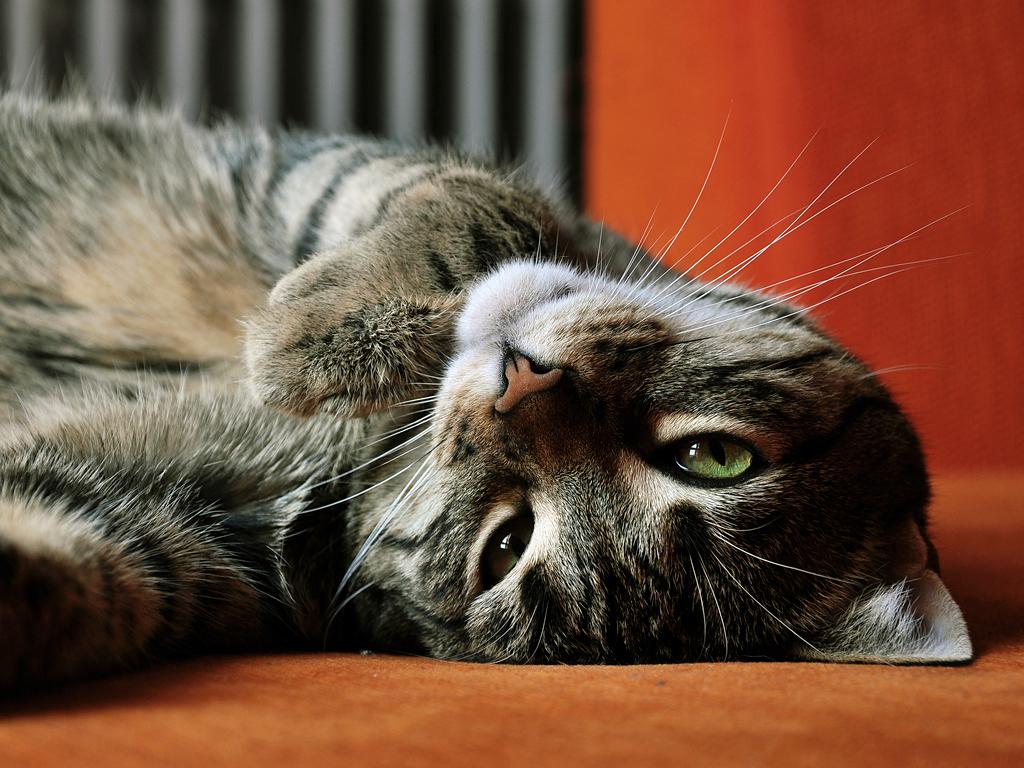 Attenti Al Gatto 25 Segnali Che Il Tuo Animaletto Sta Male Supereva
