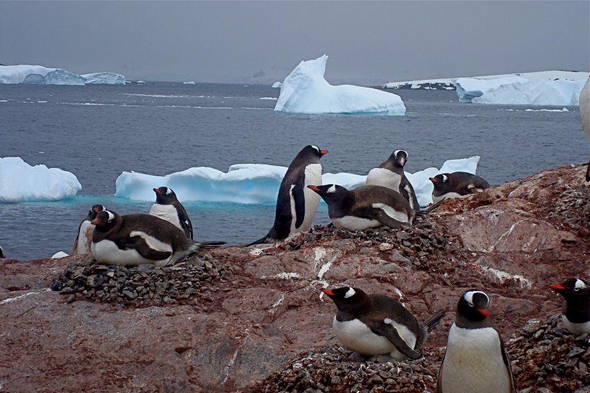 AAA cercasi volontari per guardare foto di pinguini