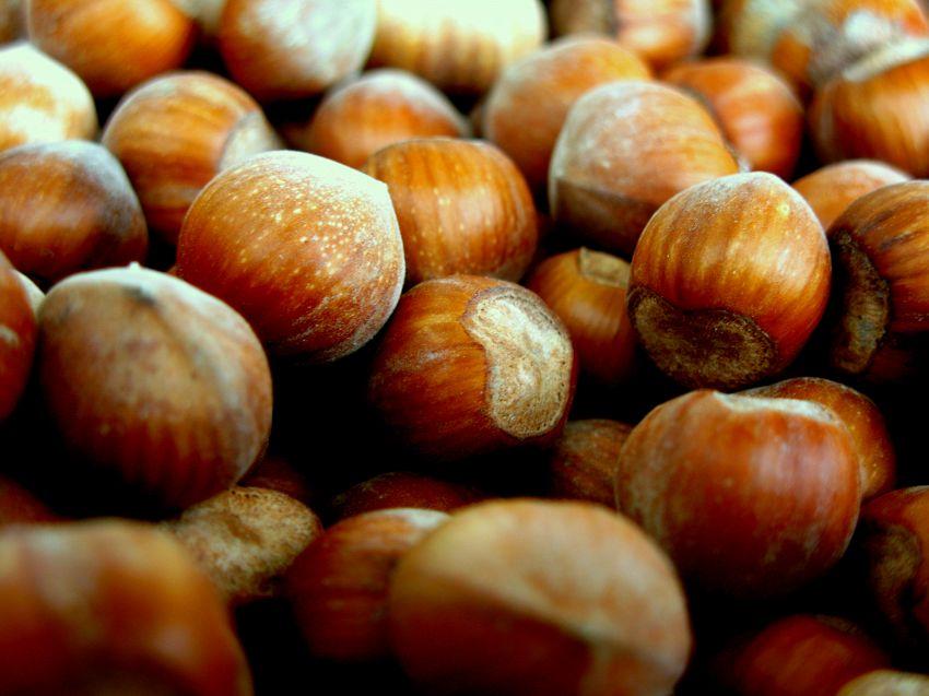 Alimenti ricchi di vitamina e: nutrizione e proprietà dei Cibi