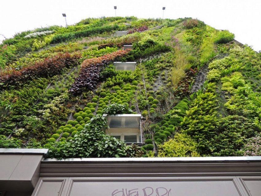 Giardini verticali: come realizzarli sia per interni sia per esterni