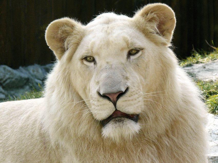 I 5 animali più belli del mondo, una classifica spettacolare
