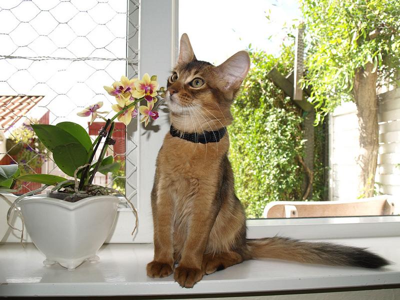 Perché non bisogna mettere il sonaglino al collare del gatto