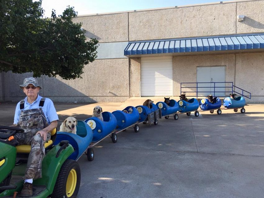 Pensionato costruisce trenino per cani, perché li ama