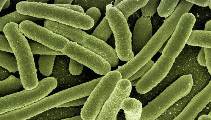 Questi nanofiori individuano i batteri prima che vi facciano ammalare