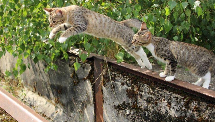 I gatti capiscono le leggi della fisica, lo dice la scienza