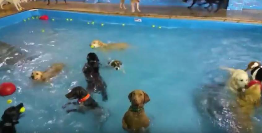 Questo cane non vuole nuotare, e ha fatto il giro del web