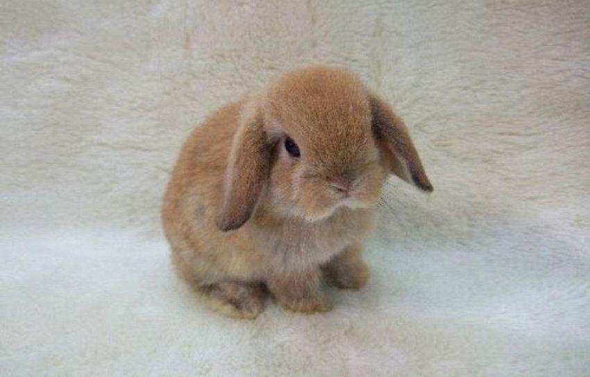 I conigli più strani al mondo: dal più buffo al peluche