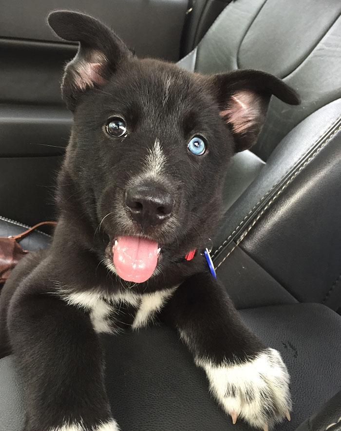 Queste foto di cani appena adottati vi faranno commuovere